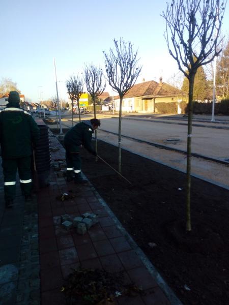 Otpočela sadnja u Železničkoj i ulici Dr Dušana Popovića