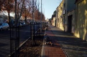 Sadnja u Železničkoj i Dr Dušana Popovića